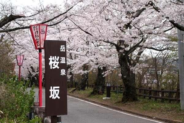 0428桜4.jpg
