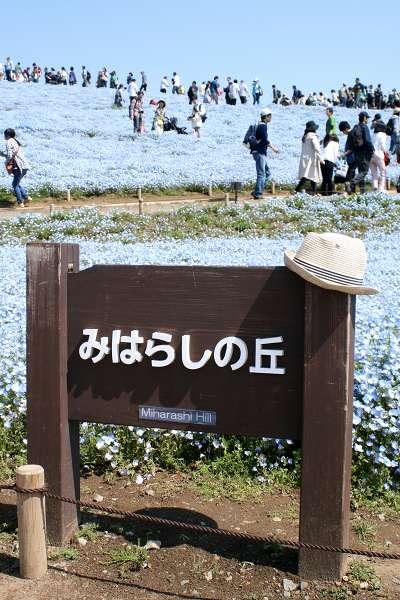 0510青い丘02.jpg