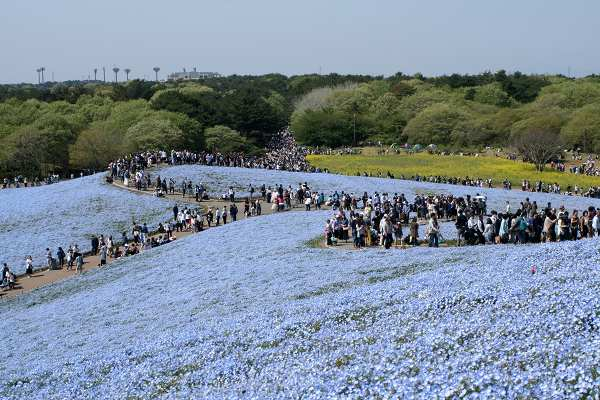 0510青い丘05.jpg