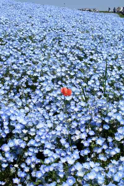 0510青い丘07.jpg