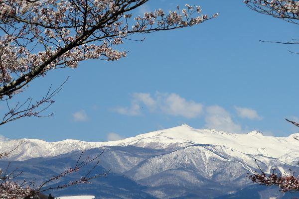 0414桜01.jpg