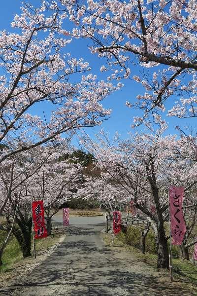 0420桜4.jpg