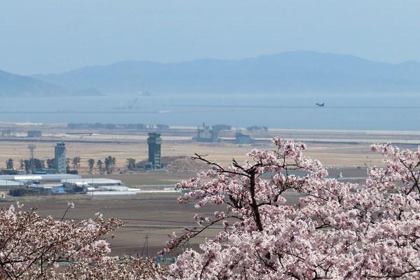 0420桜6.jpg