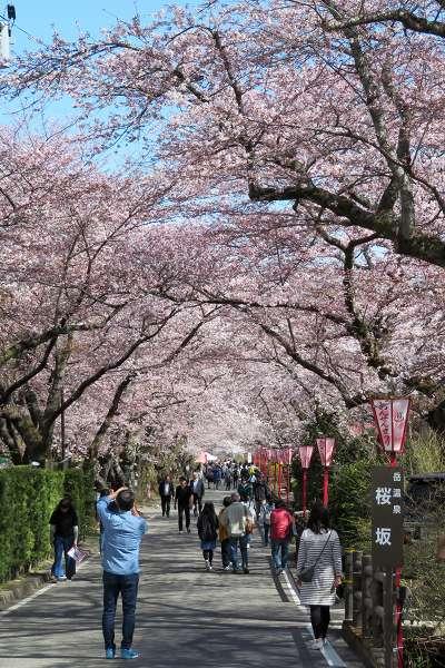 0420桜7.jpg