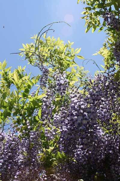 0519紫1.jpg